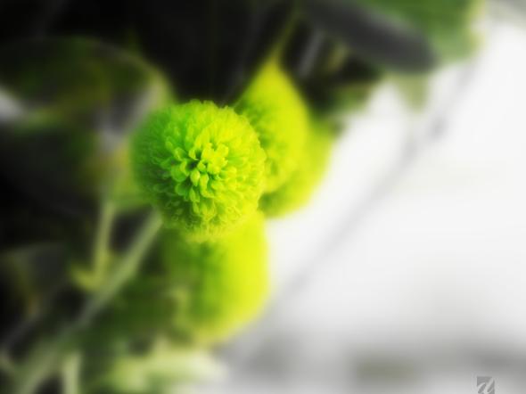 Green Details