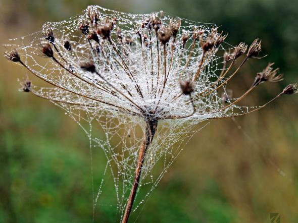 Dewdrops Chords